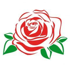 Rose rouge et vert 10,5 x 15 cm