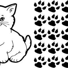 Chat et 20 pattes de chat